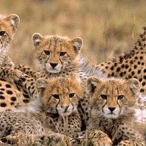The best luxury safari packages for 2013