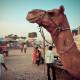 Take a tour of Rajasthan, India