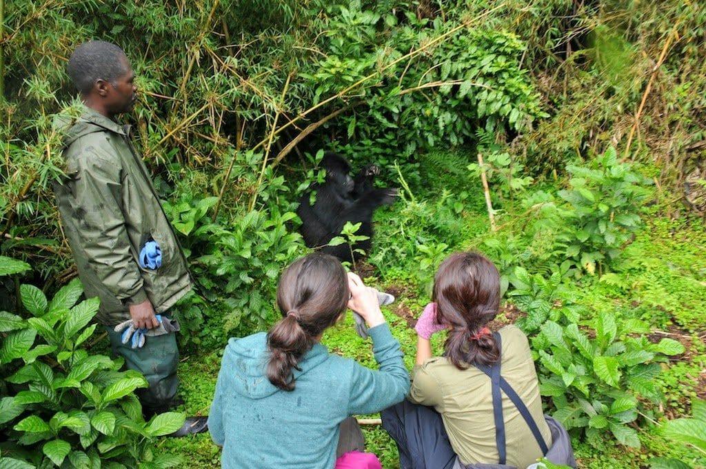Best gorilla treks in the world