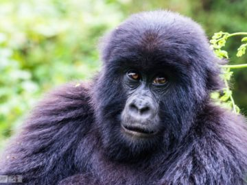 safari_Rwanda-9736-1024x684
