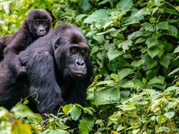 Nyamirambo – The Cultural Haven of Rwanda